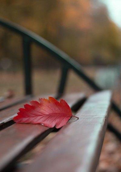 Autumn Bits & Pieces: Archive