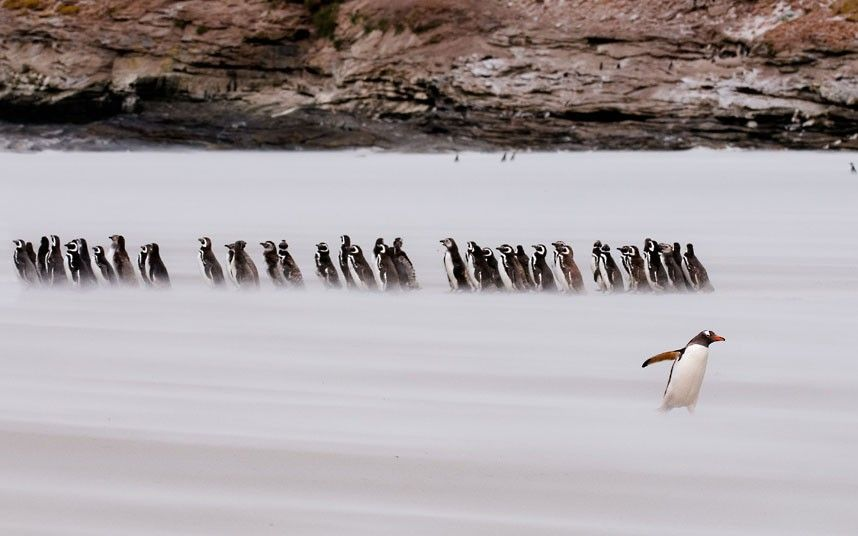 Dont follow the crowd ;-)