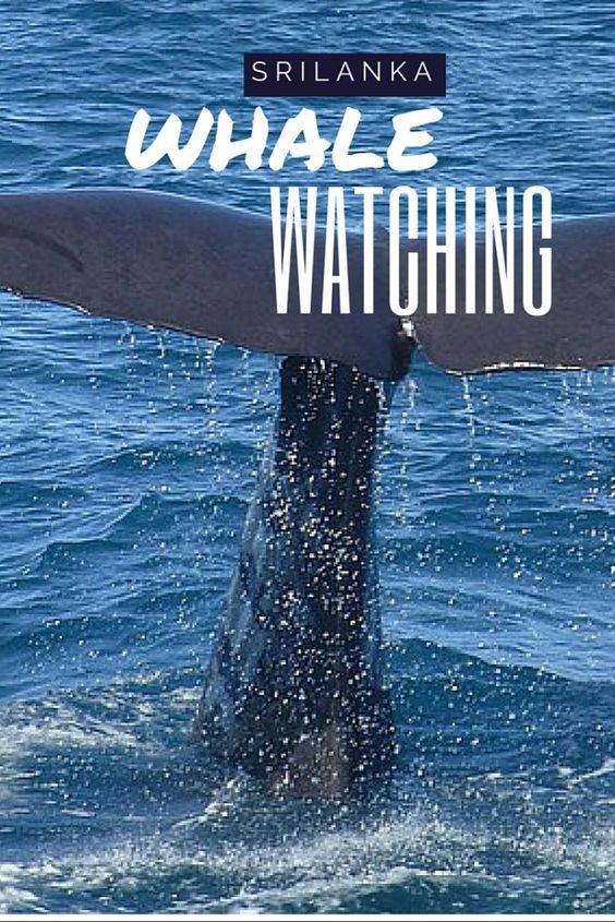 Tips for Whale Watching in Mirissa, Sri Lanka