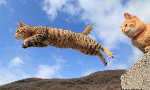 飛び猫写真集