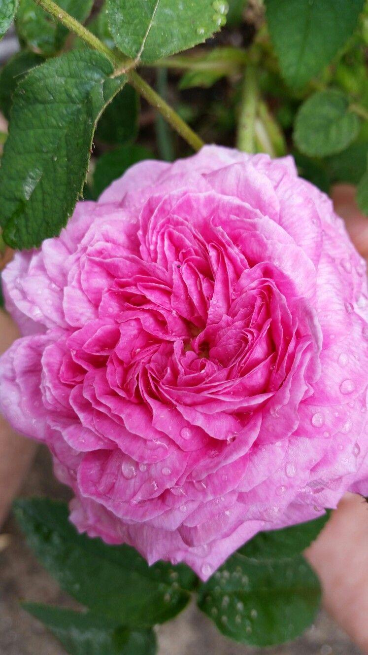 Park Art|My WordPress Blog_Secret Garden Rose Nyc Reviews