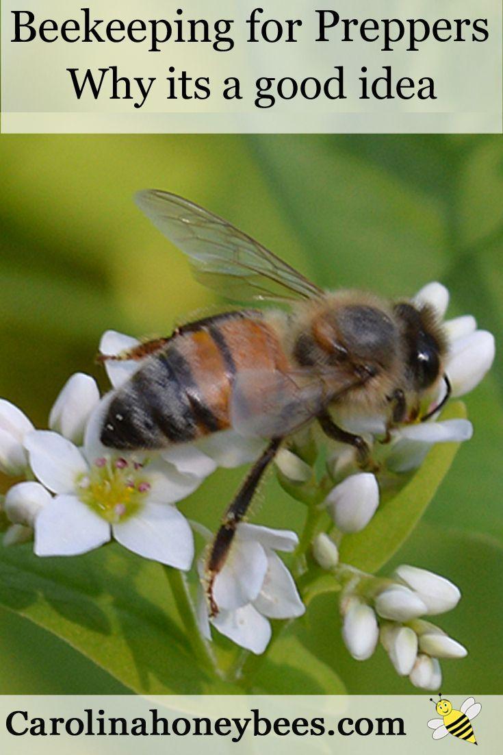 Benefits of Beekeeping In Your Backyard | Bee keeping, Bee ...