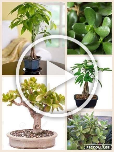 New bath room plants feng shui tips Ideas #bath #plants# ... on Modern Feng Shui Garden  id=81473