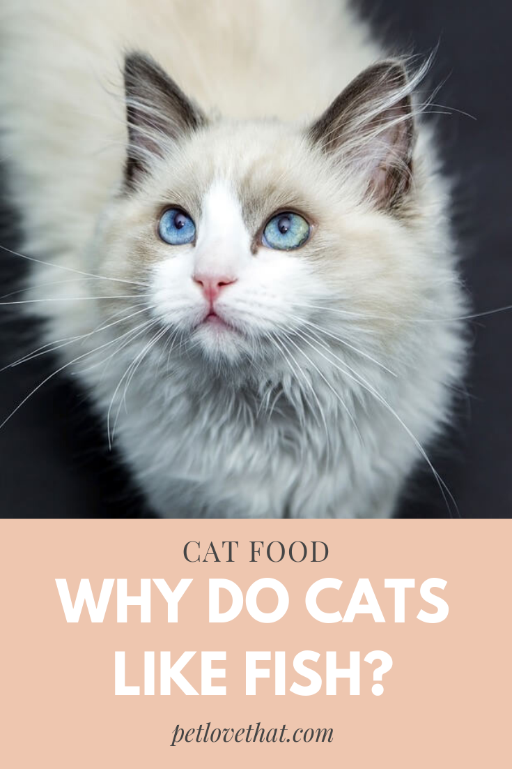 Why Do Cats Like Fish? Is Fish Really Healthy For Cats