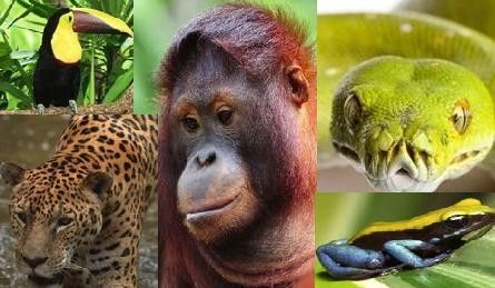 Tropical Rainforest Animals | The o'jays, Tropical and Animals