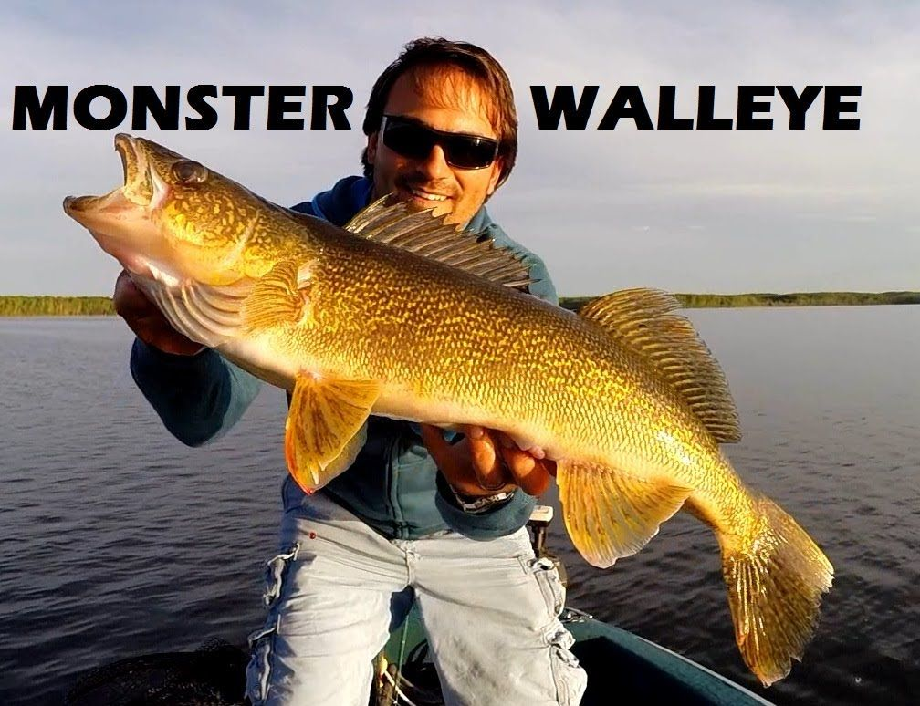 How To Catch Big Spring Walleye Pinehurst Lake Alberta Northernpike Walleye Fishing Alberta Canada Pinehurstlake Rapala Walleye Fishing Adventure Fish