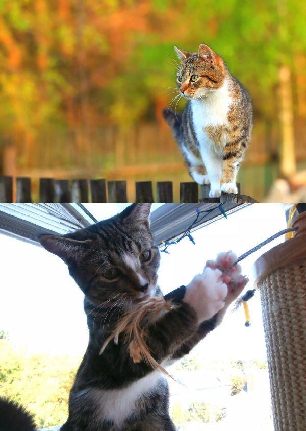 Top Reasons to Keep Cats Indoors animals reasons keep