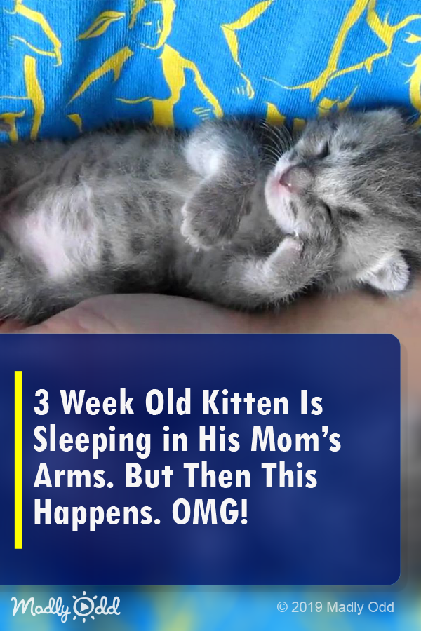 3 Week Old Kitten Is Sleeping In His Mom S Arms But Then This Happens Too Cute Kittens Funny Kittens Cutest Kittens And Puppies