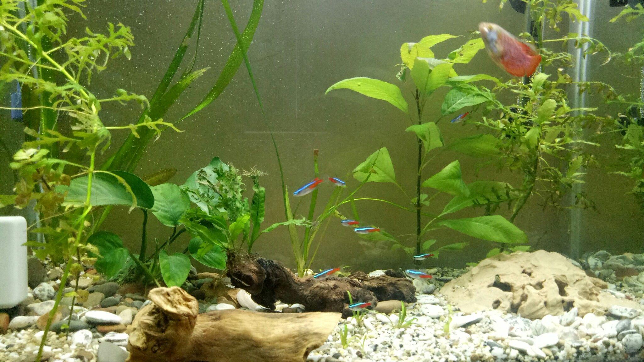 Pin by Khaled Larbi Bouamrane on aquarium planter