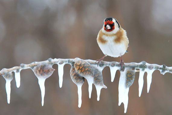 Superbes photographies de paysages d 39 hiver et de neige l 39 hiver et les animaux pinterest - Image animaux gratuite ...