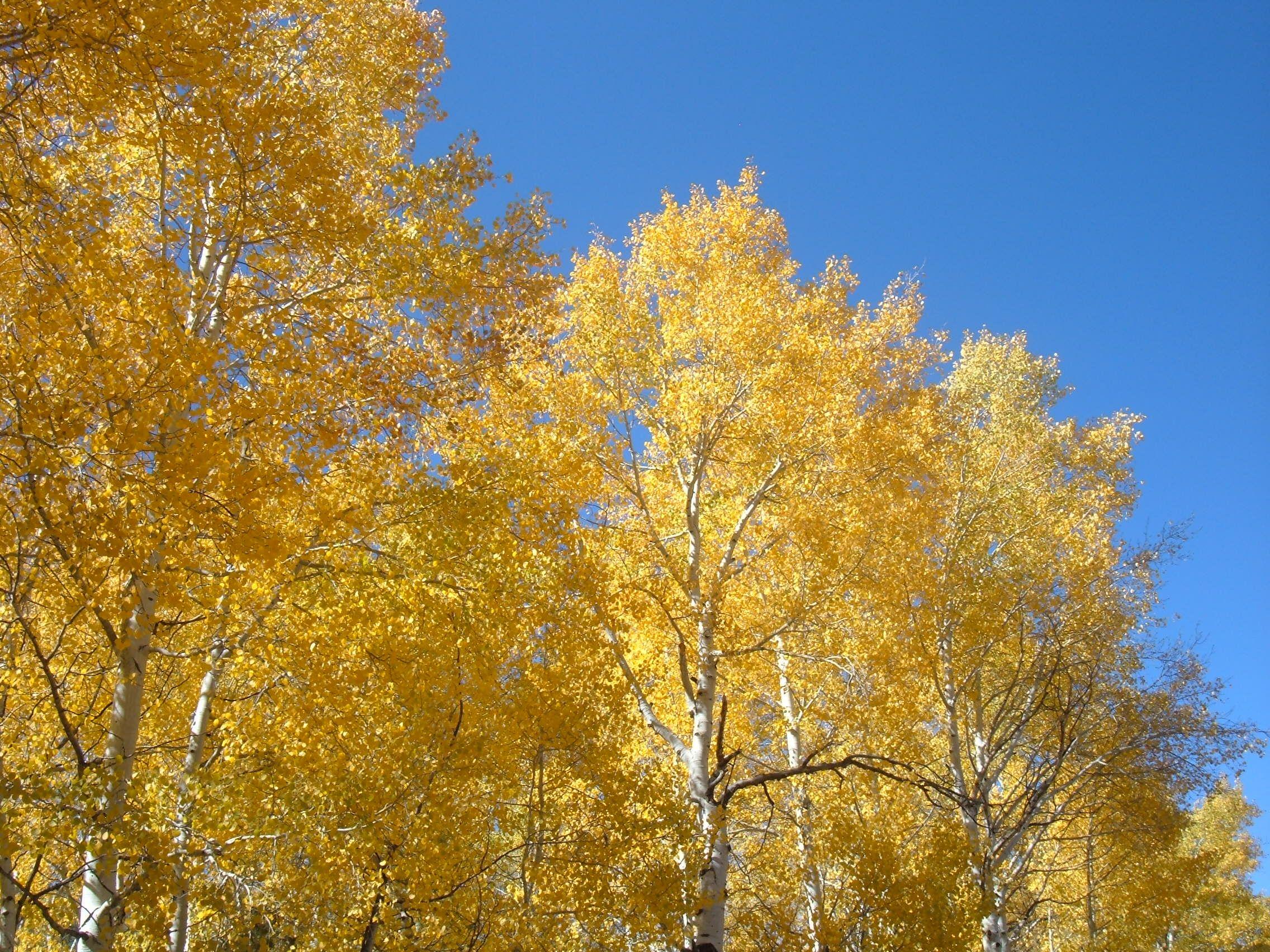 Fall Makes me happy