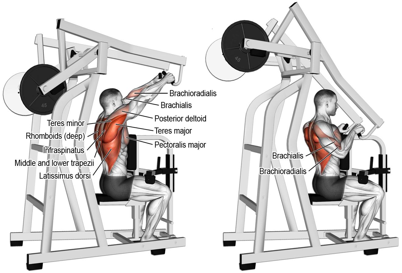 comment effectuer le high rowing la machine anatomie musculation dos pinterest poids. Black Bedroom Furniture Sets. Home Design Ideas