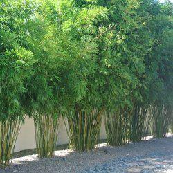Island Bamboo Garden Landscaping Pinellas Park