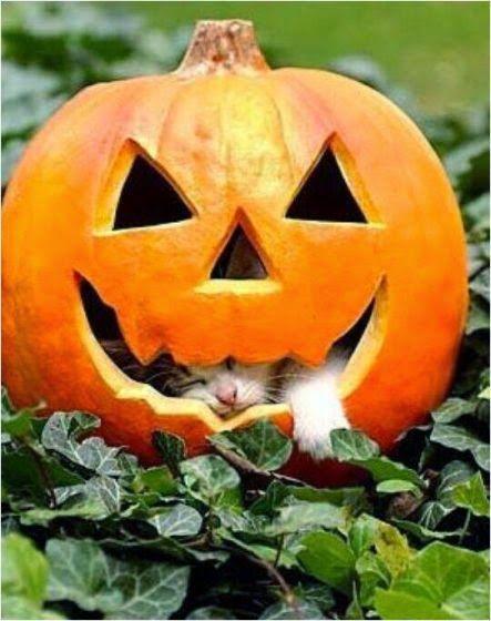 Интересные статьи и новости со всего мира | Хэллоуин кот ...
