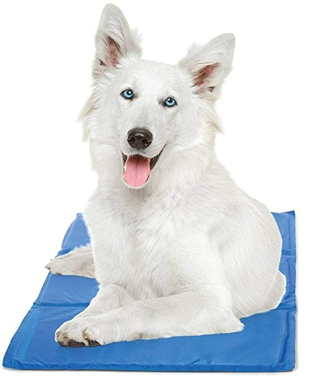 Pin On Brain Training For Dogs