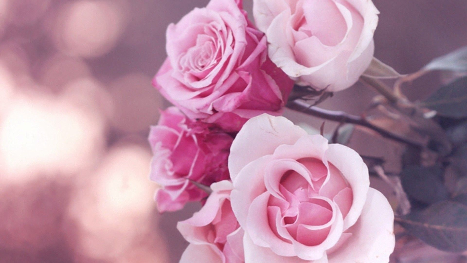 Pink Roses Tumblr Background With Images Beautiful Pink Roses