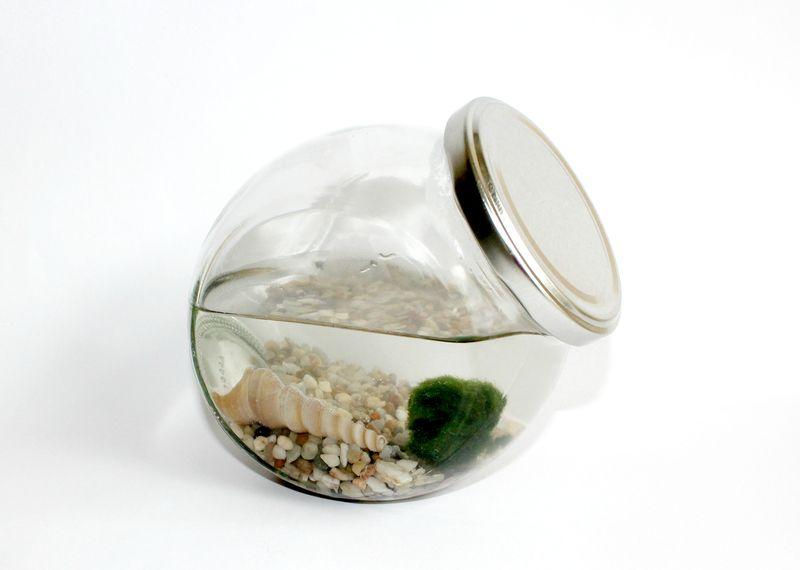 """♥ Marimo - Miniaquarium """" Bonbonglas mit silberfarbenem Deckel """" ♥  ..................................    Marimos, wörtlich """"Ball Algen"""",auch als j..."""