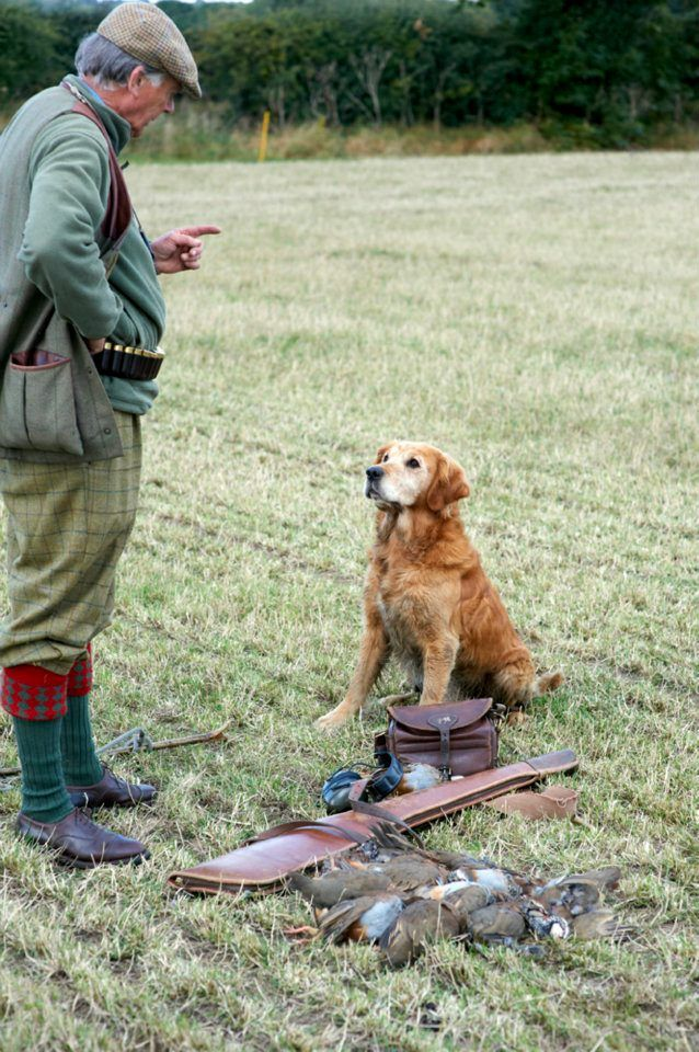 Golden By Andrew Howells Hunting Dogs Golden Retriever Hunting Upland Bird Hunting