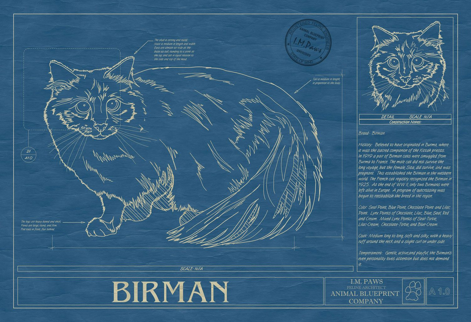 Cats in art illustration and design blueprint of birman cat die cats in art illustration and design blueprint of birman cat malvernweather Images