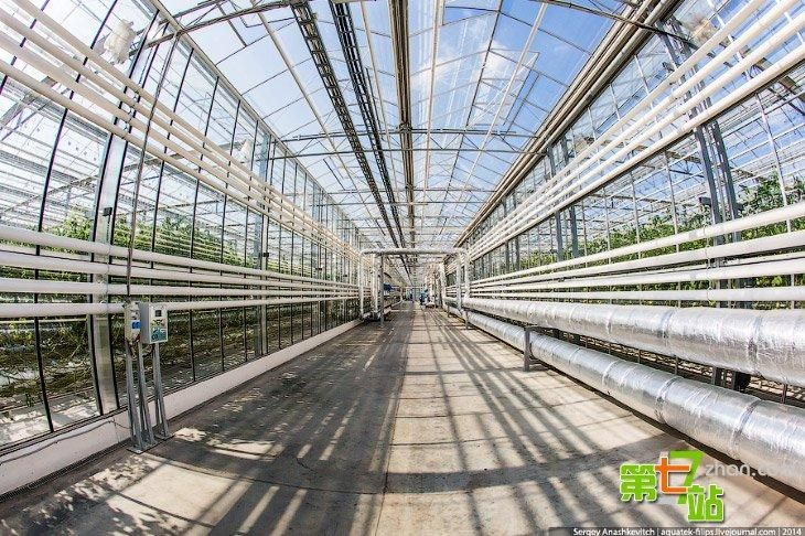 Comprehensive largest greenhouse in Russia