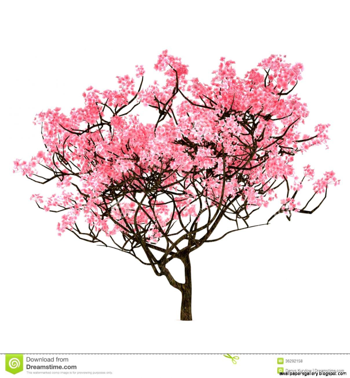 Cherry Tree Drawing Google Search Sakura Tree Japanese Art Blossoms Art