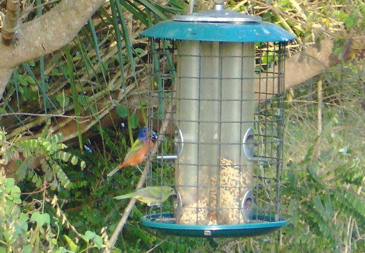 Blogs | Fairchild Tropical Botanical Garden - How to ...
