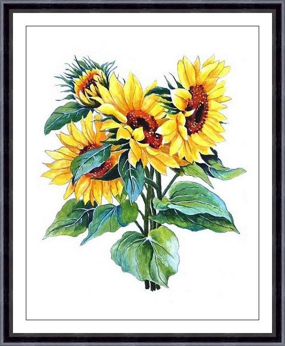 Sunflower Watercolor Painting Floral Art Print Watercolor Flower ...