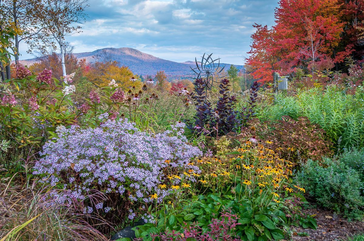 Our Top 10 Favorite Maryland Native Pollinator Perennials