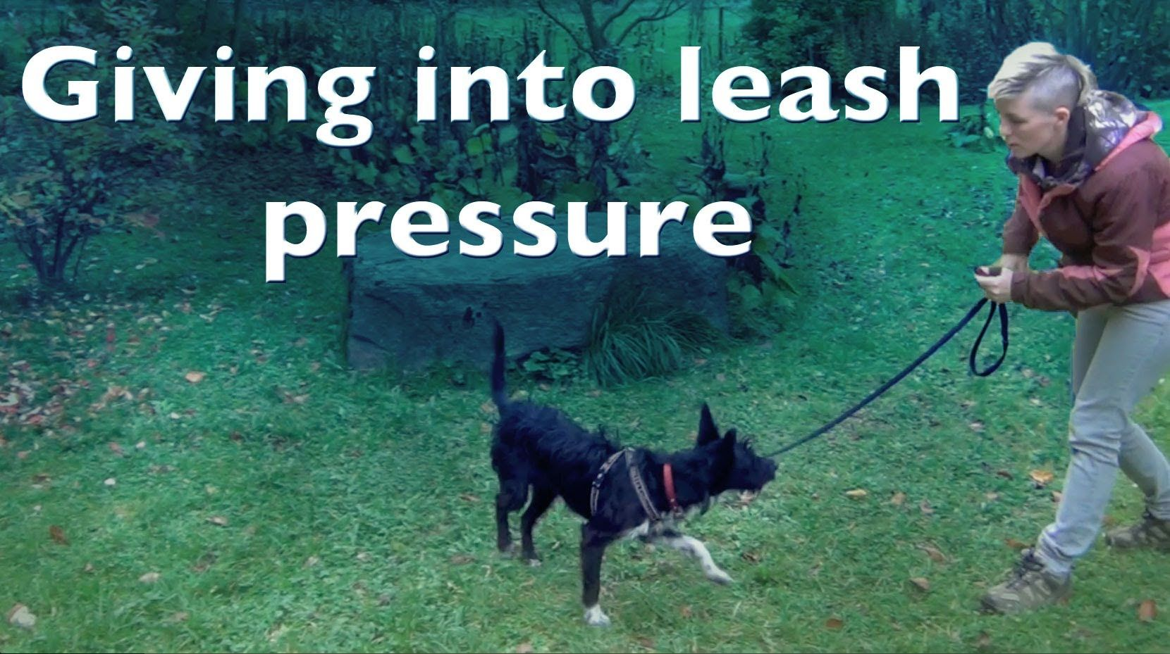 Giving Into Leash Pressure For Shy Reactive Dogs Reactive Dog