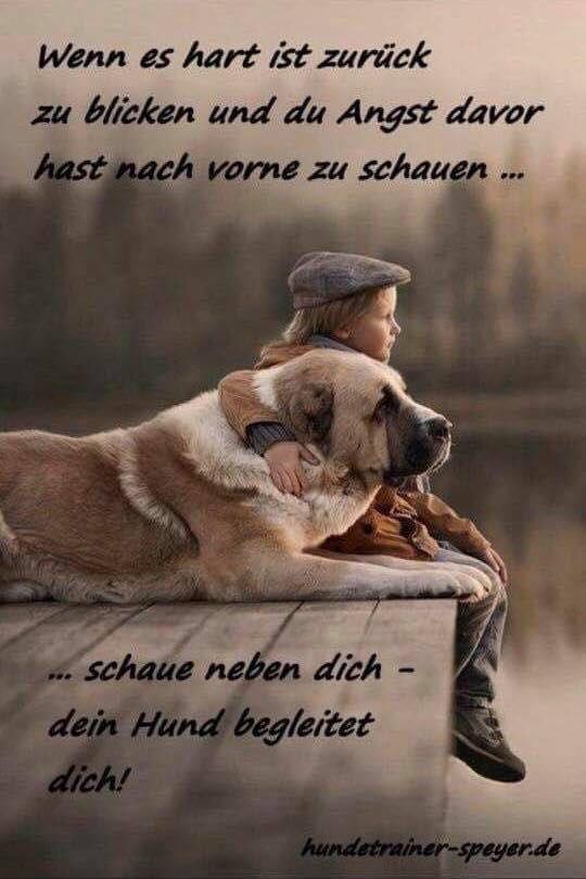 Liebe Meinen Hund, Sprüche Für Die Seele, Sprüche Tiere, Hundewelpen, Hund  Sprüche, Sprüche Trauer, Wahrheiten, Gedanken, Sprüche Zum Nachdenken