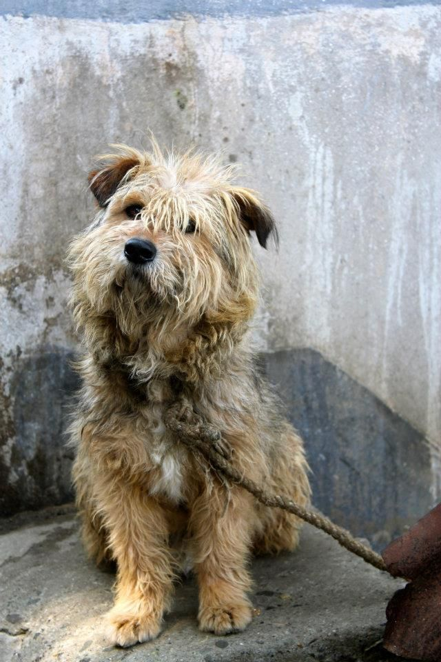 Scruffy Dog By Satmack Deviantart Com On Deviantart