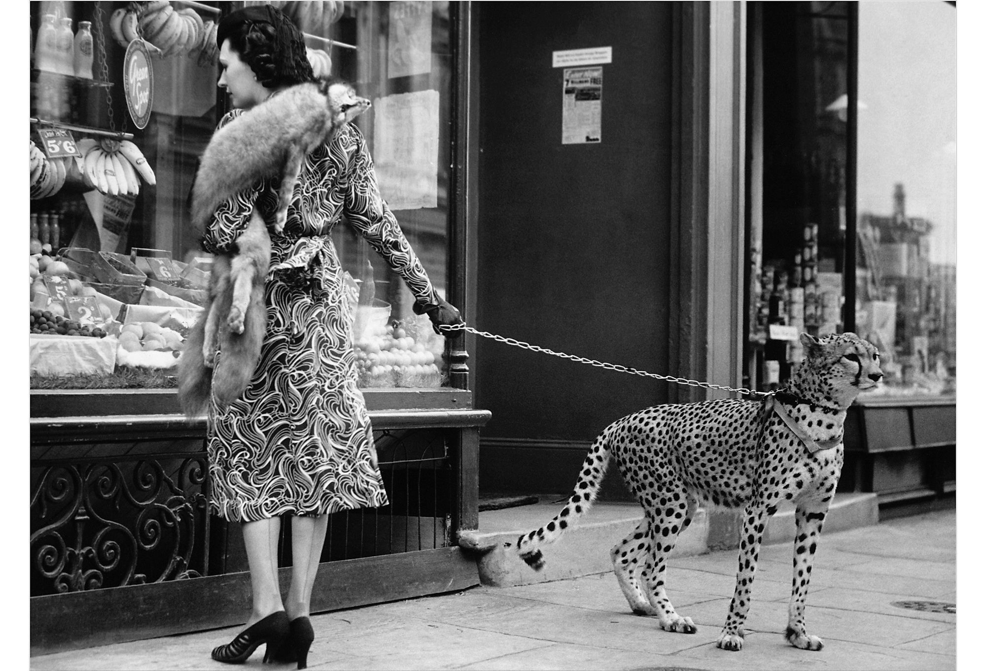 William Stafford Gallery Andy Irvine, Cheetah Who Shops