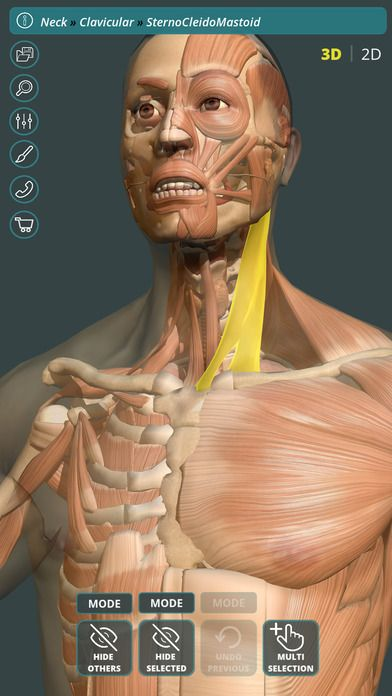 Visual Anatomy 3D | Human by GraphicVizion | anatomia Dubai ...
