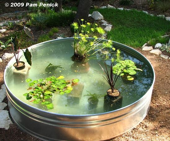 Made fish pond filter how to make a container pond in a for Koi pond plant ideas
