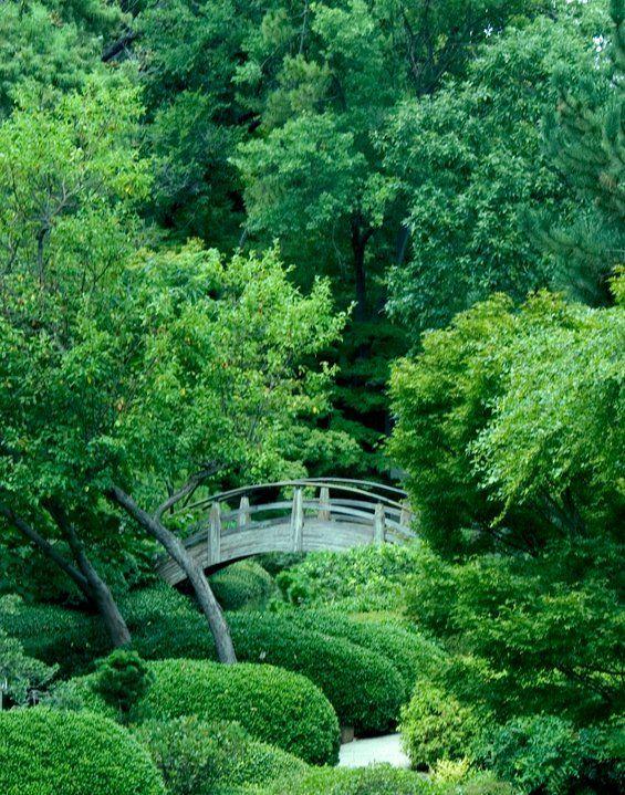 Botanic Gardens, Fort Worth, Texas. The Japanese Water