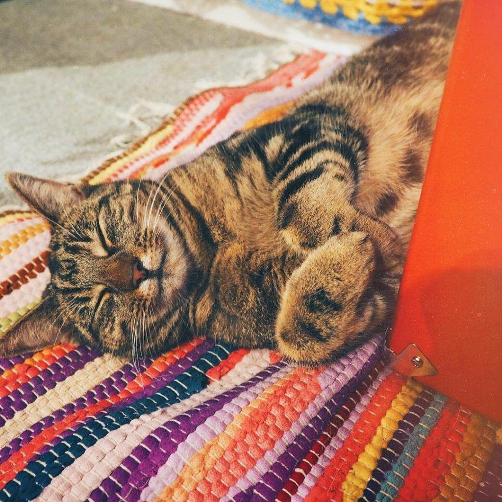 blogger cats