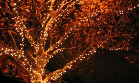 Outdoor tree lights 5 photo christmas trees pinterest outdoor tree lighting aloadofball Gallery