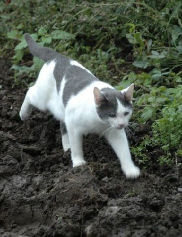 The Dark Times Birdclan Cats Grey And White Cat Cats Spotted Cat