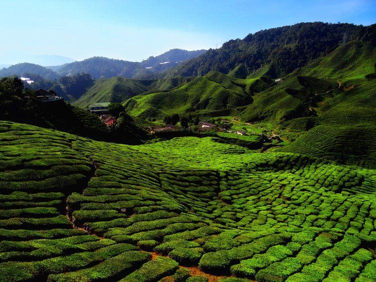 Cameron Highlands, Malaysia Cameron highlands, Travel