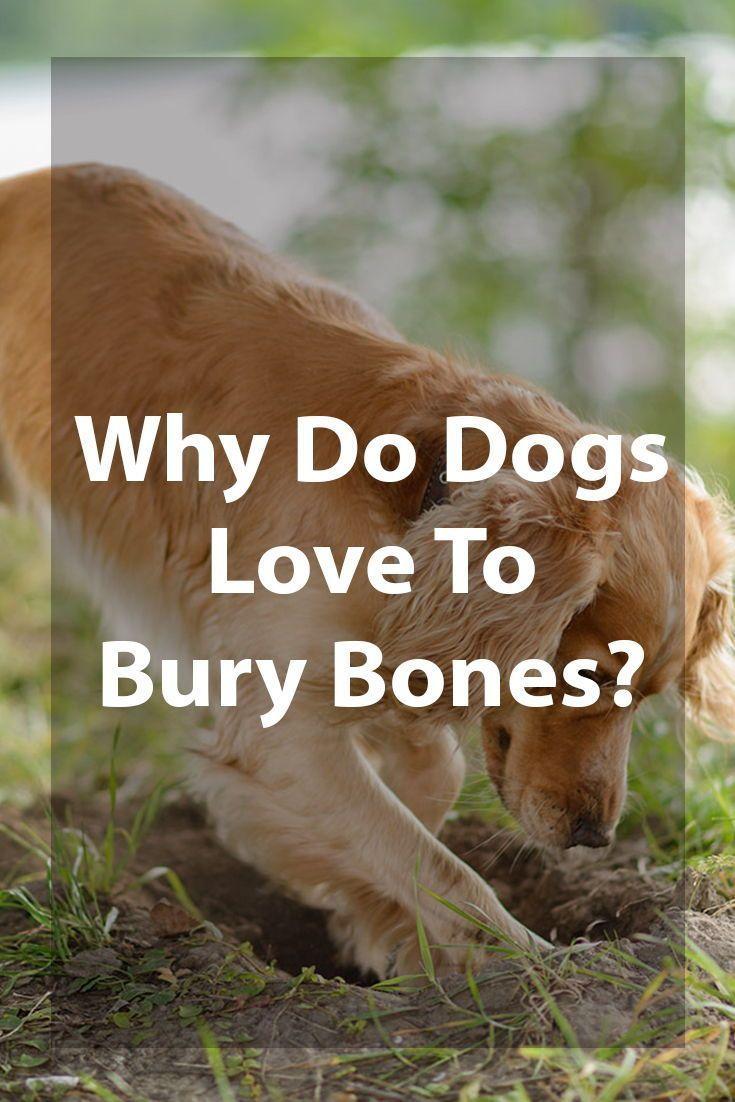 Why Do Dogs Bury Bones? | Dog training, Training your dog ...