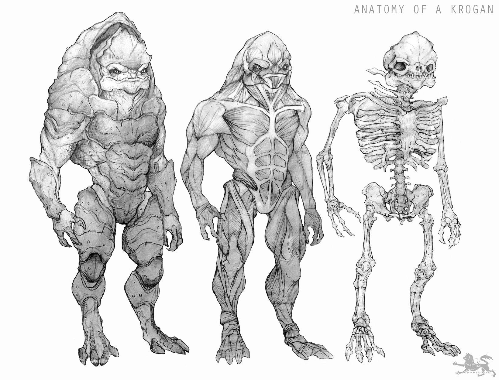 Anatomy Of A Krogan Clean Version By Lupodirosso On Deviantart