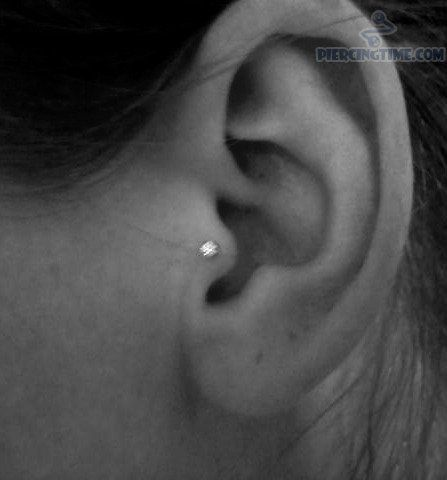 Ear Piercing Tragus Stud With Tiny Studs For This Is Not Bad Perhaps Next