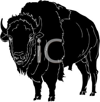 Royalty Free Buffalo Clip Art Buffalo Clipart Art Pacific Northwest Art Animal Art
