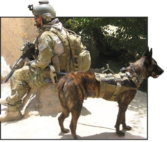 Tactical Cat Vest additionally Tactical Sling Dog Rappelling Harness P 813 also Tactical Climbing Harness in addition Custom Painted Single Bar Muzzle also 321869543411. on tactical dog vest harness