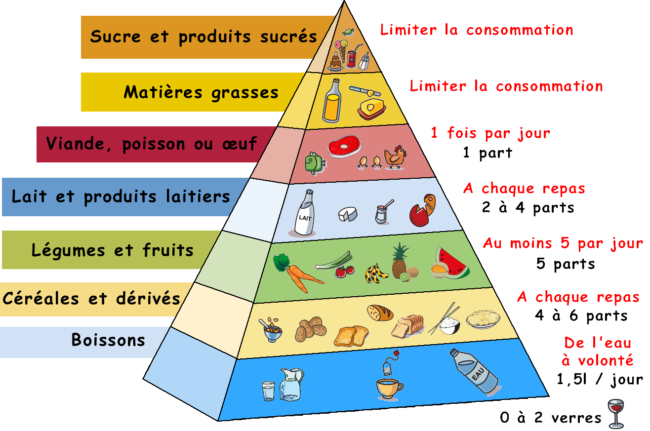 Image result for la pyramide alimentaire