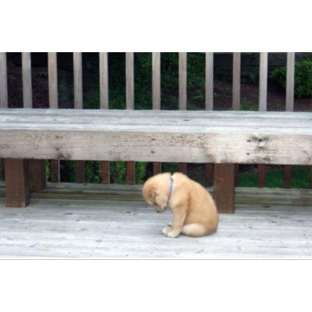 Uff!  Too sad!