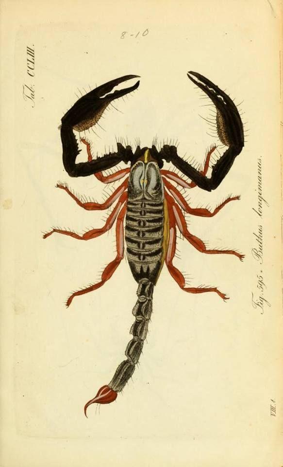 Pin de GARM17 en insectos | Pinterest | Insectos, Zoología y Animales