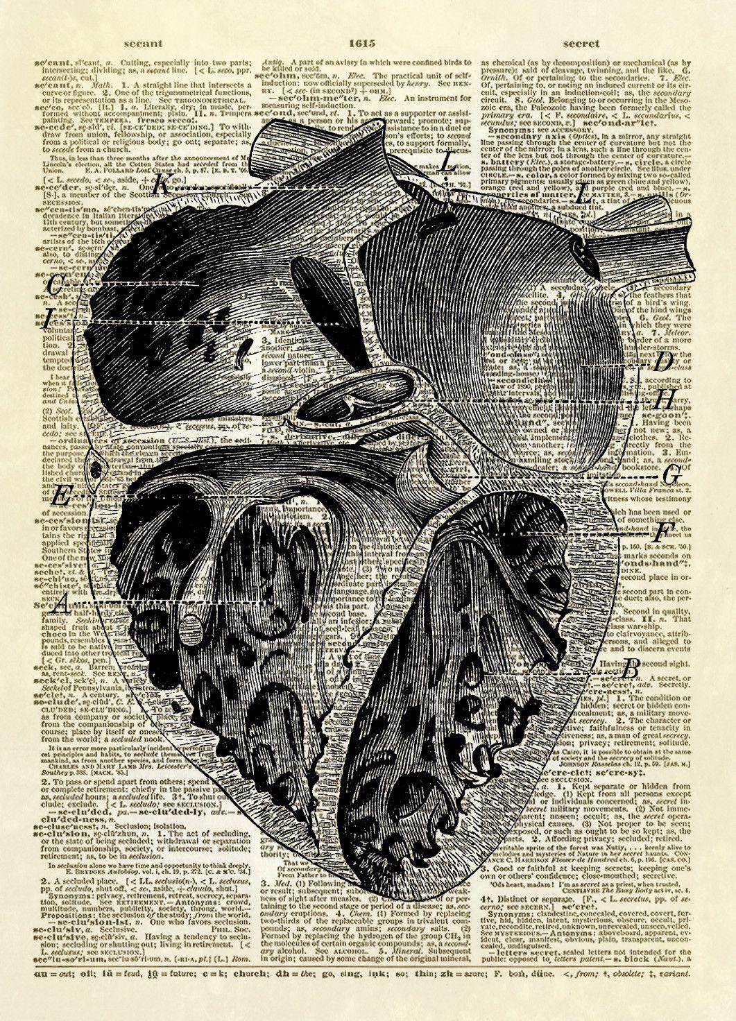human heart chambers diagram dictionary art print | medical, Muscles