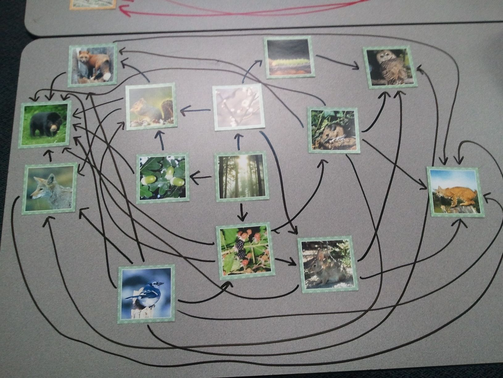 Food Web Class Activity Put Up The Pics And Have Students