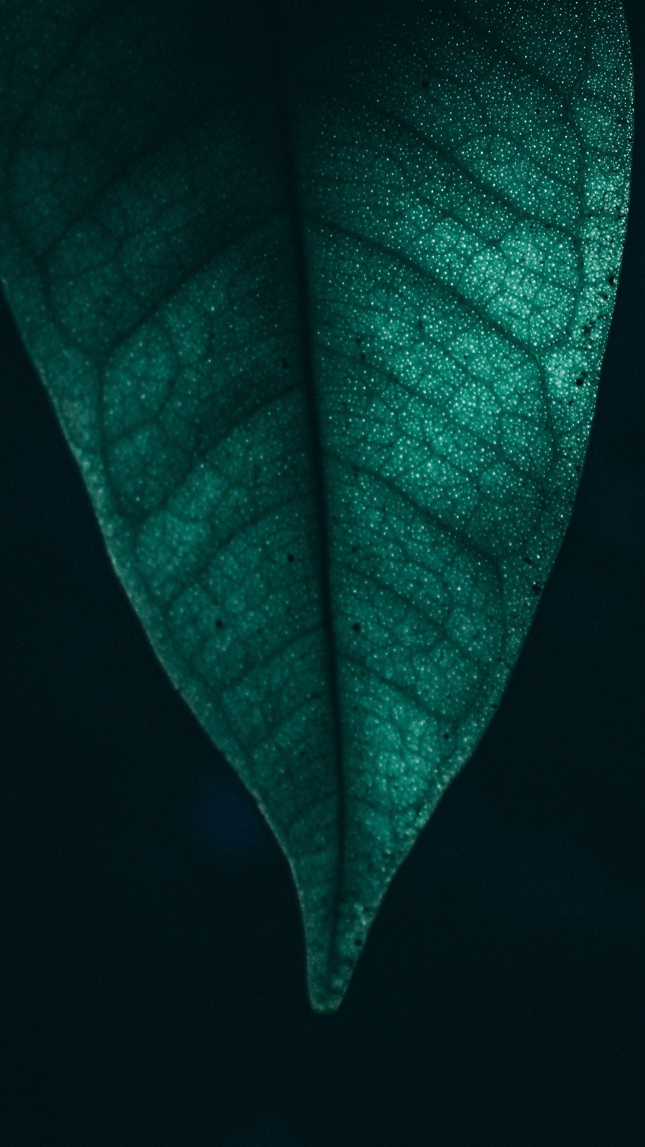 Nature Green Leaf Macro 4k Wallpapers Hd 4k Background For Android Wallpapers 4kwallpaper Android Wallpaper 4k Background Backgrounds For Android